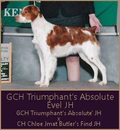 GCH Triumphant's Absolute Evel JH