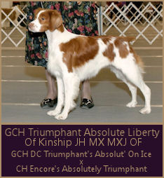 GCH Triumphant Absolute Liberty At Kinship JH