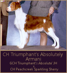 CH Triumphant's Absolutely Armani