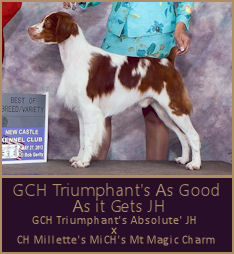 GCH Triumphant's As Good As it Gets JH
