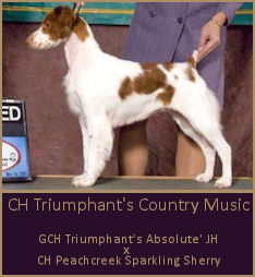 CH Triumphant's Country Music