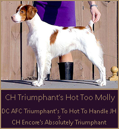 CH Triumphant's Hot Too Molly