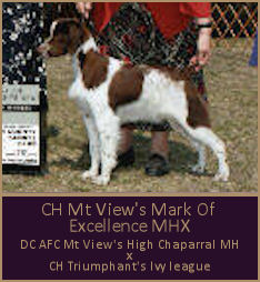 CH Mt View's Mark Of Excellence MHX