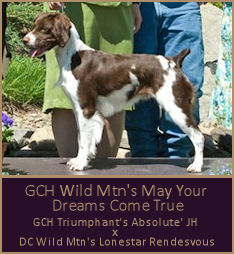 GCH Wild Mtn's May Your Dreams Come True