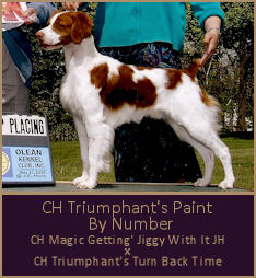 CH Triumphant's Paint  By Number