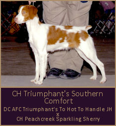 CH Triumphant's Southern Comfort
