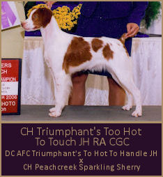 CH Triumphant's Too Hot To Touch JH RA CGC