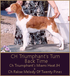 CH Triumphant's Turn Back Time